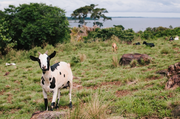 Banda Island - A relaxing roadtrip to Lake Victoria Island & a few nights in Paradise! // WeAreAdventure.us