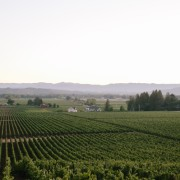 Wine tasting and cocktails in Healdsburg, Wine Country, includes Medlock Ames // WeAreAdventure.us